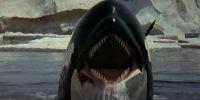 Смерть среди айсбергов. Фильм 1977